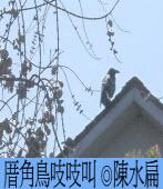 厝角鳥吱吱叫 ◎陳水扁