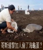 哥斯達黎加人偷了海龜蛋?