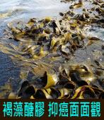 褐藻醣膠 抑癌面面觀∣李惠芬|台灣e新聞