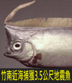 竹南近海捕獲3.5公尺地震魚 |台灣e新聞