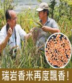瑞岩香米失傳38年 費時兩年復育成|台灣e新聞