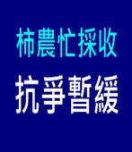 柿農忙採收 抗爭暫緩 |台灣e新聞