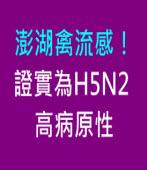 澎湖禽流感!證實為H5N2高病原性|台灣e新聞
