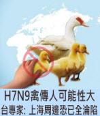 H7N9禽傳人可能性大 台專家:上海周邊恐已全淪陷∣台灣e新聞