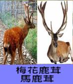 鹿茸-台灣e新聞