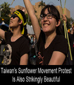 Taiwan's Sunflower Movement Protest Is Also Strikingly Beautiful-�x�We�s�D