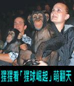 猩猩看「猩球崛起」 萌翻天- 台灣e新聞