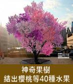 神奇果樹 結出櫻桃等40種水果 - 台灣e新聞
