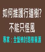 不能只怪風 專家:全盤檢討路樹養護 - 台灣e新聞