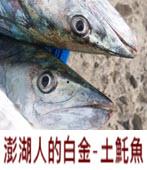 澎湖人的白金-土魠魚-◎魚夫 -台灣e新聞