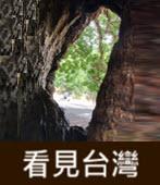 看見台灣!茄苳樹神木樹洞像台灣 - 台灣e新聞