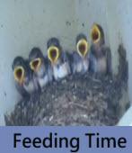 Feeding Time- 台灣e新聞